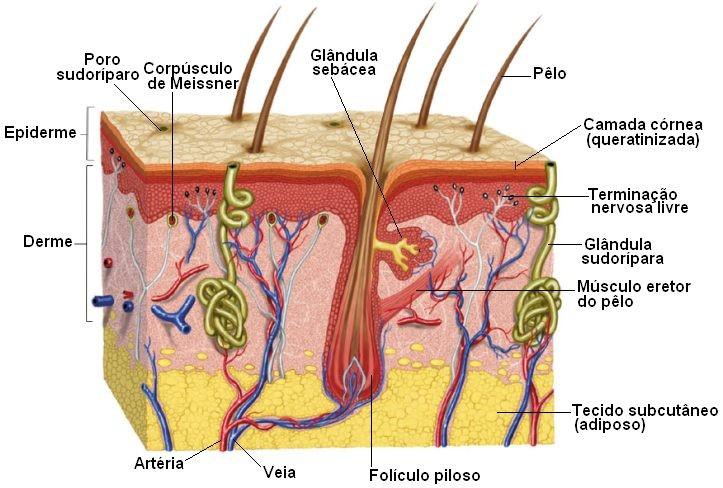 sentidos pele