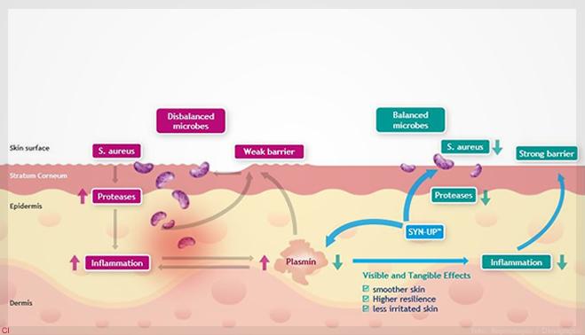 fa1cec8e5 Syn-Up quebra ciclo vicioso, inibindo a atividade da plasmina no S. aureus